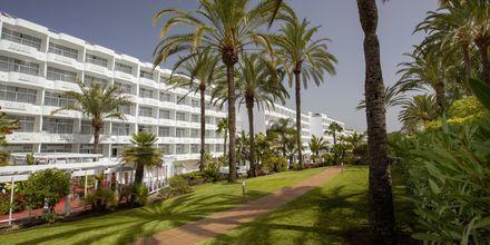 Hagen på hotellet