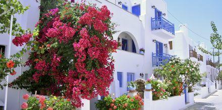 Agia Anna-stranden på Naxos