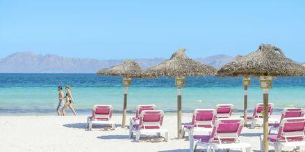 Alcudia & Playa de Muro
