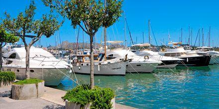 Marinaen i Alcudia