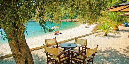 Strandliv på Lefto Gialos på Alonissos
