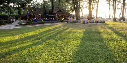 Hagen på Amora Beach Resort som ligger ved stranden i Bangtao