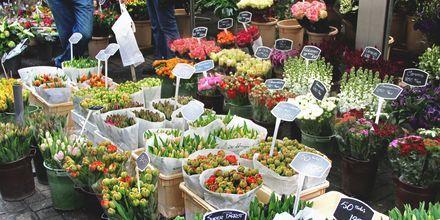 Amsterdam og Nederland er kjent for sine tulipaner. På tulipanmarkedet kan du blant annet kjøpe med deg løker.