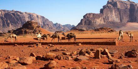 Wadi Rum utenfor Aqaba i Jordan