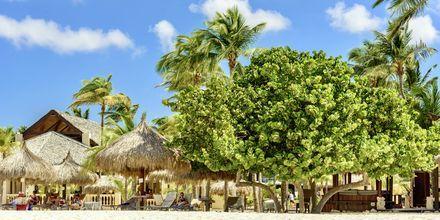 Stranden Eagle Beach på Aruba.