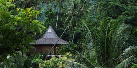 Den vakre naturen på Bali lokker turister hele året