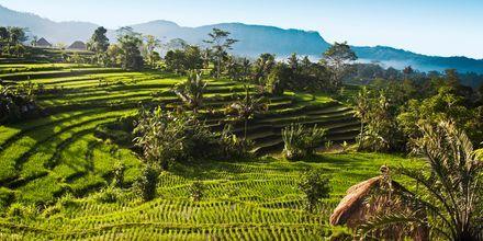 Start ferien med vår minirundreise på Bali
