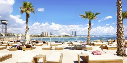 Koble helt av på stranden i bydelen Barceloneta i Barcelona.
