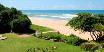 Strand i Bentota