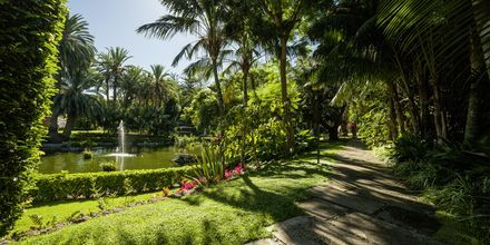 Hagen på Botanico