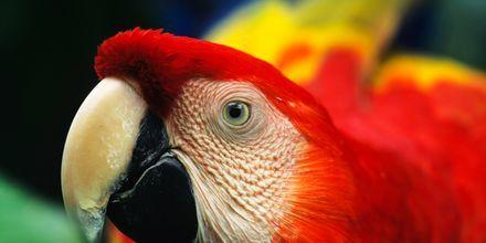 Amazonas har et betydelig antall ulike dyrearter