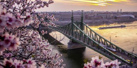 Broen som deler Budapest i Buda og Pest kalles kjedebroen.