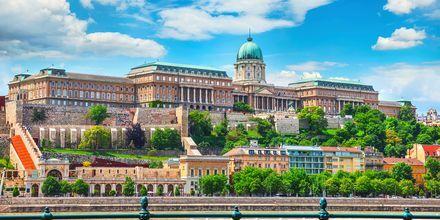 Det kongelige slottet Budapest ligger på slottshøyden og er beskyttet av UNESCO.