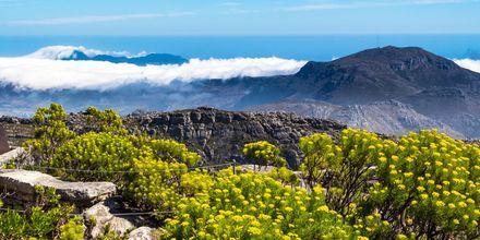 Table Mountain strekker seg hele seks mil langs kysten.