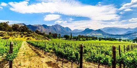 Den første vingården i Cape Town ble grunnlagt allerede i 1652.
