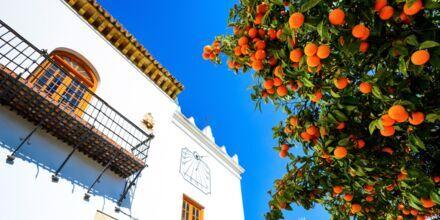 Appelsiner på appelsintorget i Marbella, Spania.