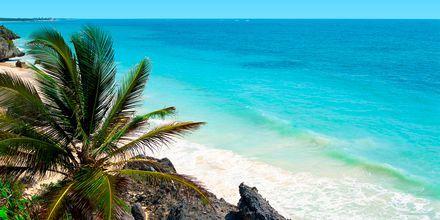 Klipper og sandstrand på Cozumel