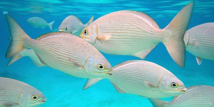 Livet under vann ved Cozumel er fascinerende