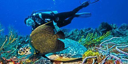 Fantastisk å dykke utenfor Cozumel