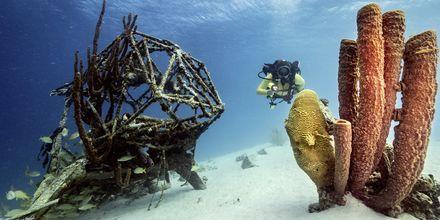 Curaçao er en av verdens beste dykkedestinasjoner.