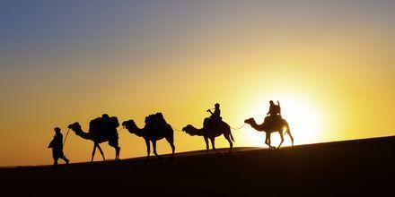 Solnedgang i ørken
