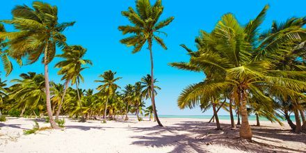Vaiende palmer og hvite strender