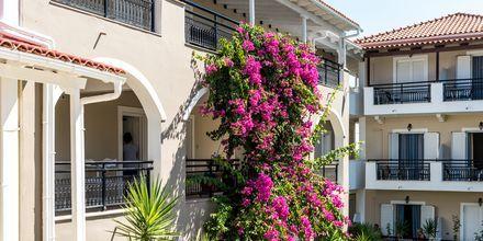 Bougainvillea vokser vil på hotellet