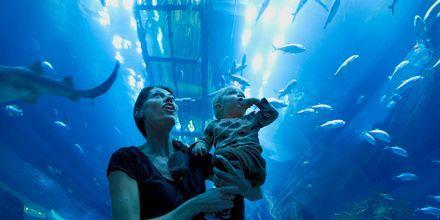 Tunnelen i akvariet i Dubai Mall