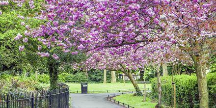 Saint Stephen's Green Park i Dublin.