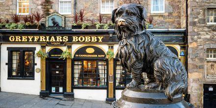 Greyfriars Bobby, en kjent statue i Edinburgh.