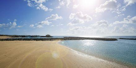 Stranden ved Elba Sara