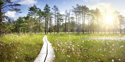 Flott natur i Lahemaa nasjonalpark, Estland.