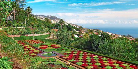 Den botaniske hagen i Funchal på Madeira
