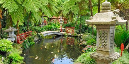 Den japanske hagen i Funchal på Madeira