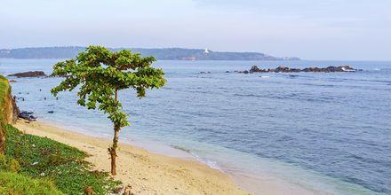 Stranden ved Galle Fort