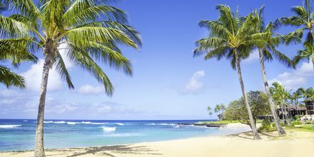 En strand på øya Kauai på Hawaii.
