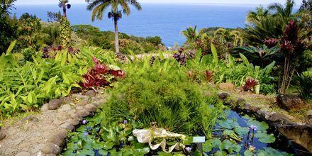 Den botaniske hagen på Maui.