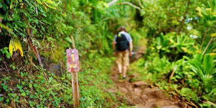Se mer av Hawaii – gå ut på en vandring.