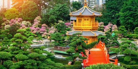 Gullpaviljongen i Nan Lian Garden, Hong Kong. En vakker park å vandre i.