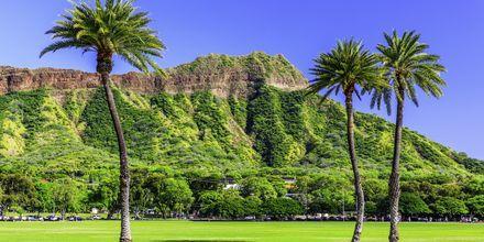 Vulkankrateret Diamond Head er synlig fra hele byen.
