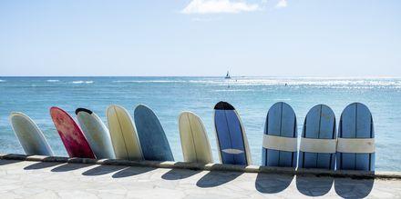 Med høye bølger og mange strender er Honolulu et perfekt reisemål for surfere.