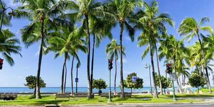 Honolulu er et herlig reisemål, takket være sitt klima. Her er det varmt, året rundt.