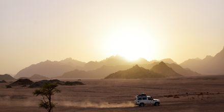 Bli med på en av Apollos utflukter - Jeeptur i ørkenen!
