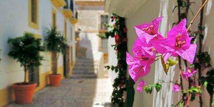 Vakker vegetasjon og sjarmerende smågater er typisk Ibiza.