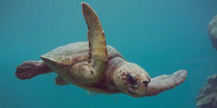 Fantastisk liv under havoverflaten på La Réunion.