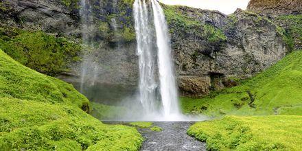 Fossefallet Skógafoss på Island