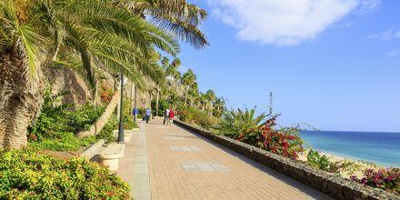 Strandpromenaden i Jandia, Fuerteventura, Spania.