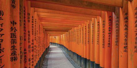 Fushimi Inari Shrine er en kjent severdighet i Kyoto, Japan.