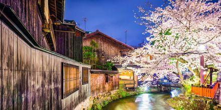 Elven Shirakawa i Kyoto, Japan.