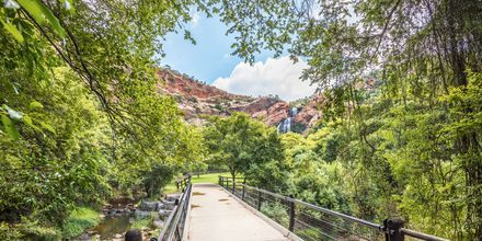 Naturreservatet Walter Sisulu Botanical Garden i Johannesburg er en stille oase.
